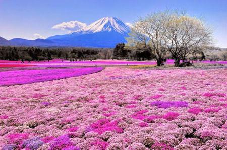 Pemandangan Bunga Yang Indah Arini Gambar